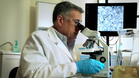 virologist studying mosquito larvae to cure the zika virus Footage