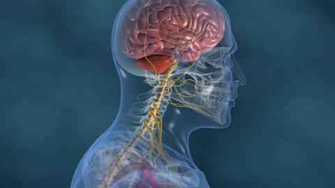 nervous system 7 Footage