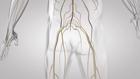 nervous system 3 Footage
