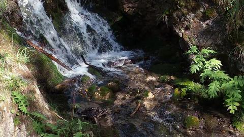 Forest stream waterfall ビデオ