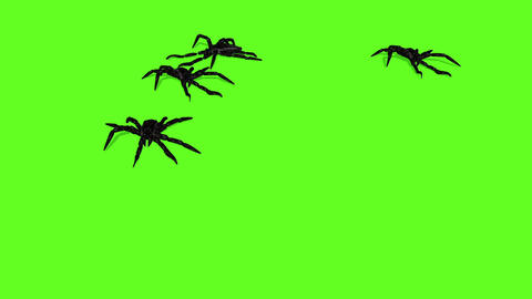 animation of spiders on green screen creepy crawling Animation