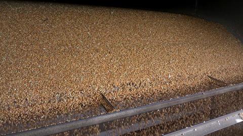 Corn grains threshing and falling to the warehouse GIF
