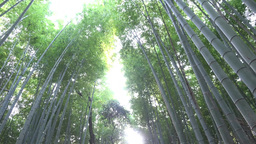 4K Path Of Bamboo/Bamboo Grove Road In Arashiyama Walk Kyoto Japan 竹林の小 stock footage