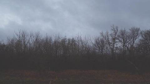 Dark autumn storm clouds fly over the bare trees of the autumn forest Live Action