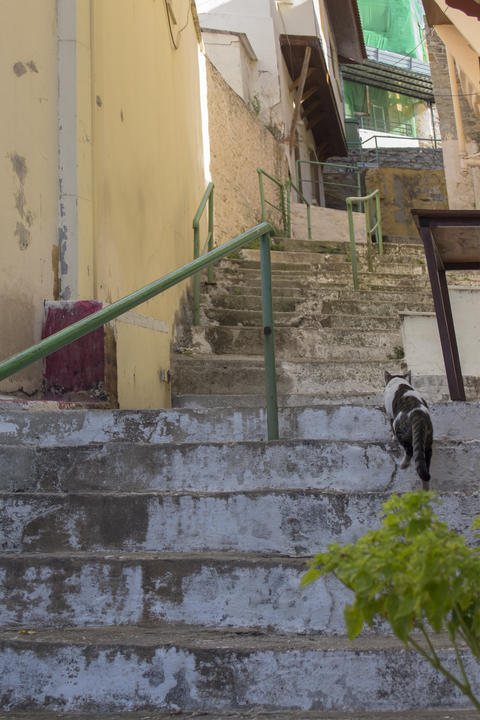 The architecture of Kavala. A small street of stairs and a cat Fotografía