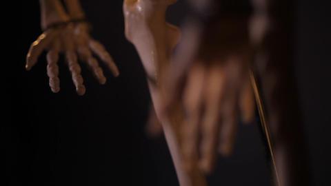 model of human skeleton GIF