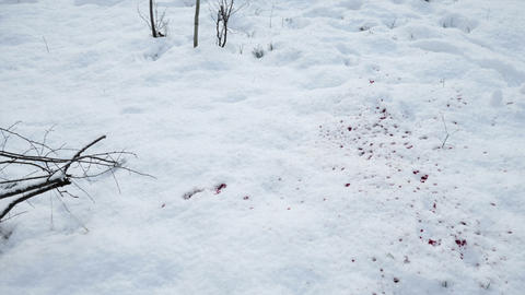 Blood splashes on the snow 영상물