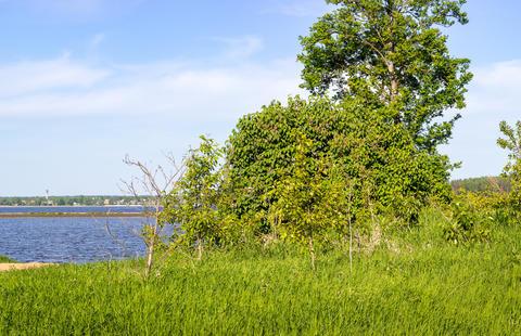 Lilac and rowan on the lake shore フォト