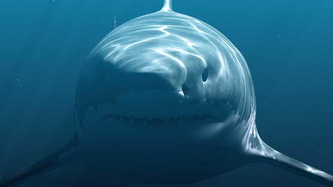 Great White Shark (Megalodon) 애니메이션