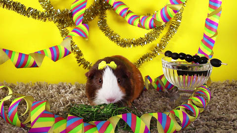 Happy new year. New year's eve cute pet animal party concept 2019 2020 Live Action