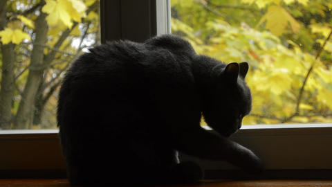 Cat sitting on the windowsill and looks out the window 2 Archivo