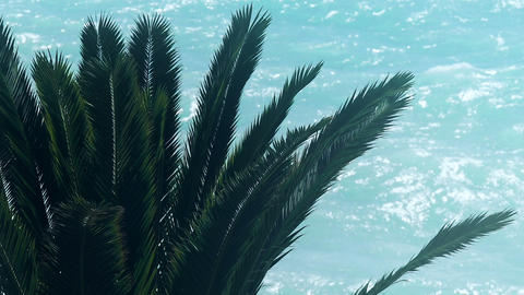 Palm tree on blue sea background, tropical summer... Stock Video Footage