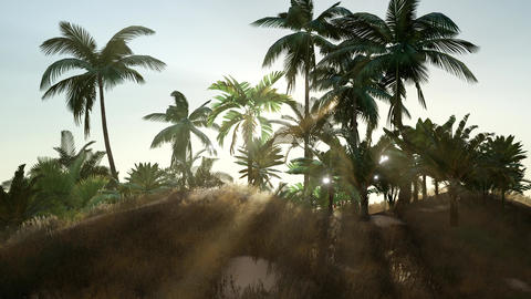 Tropical beach in sunny day Live Action