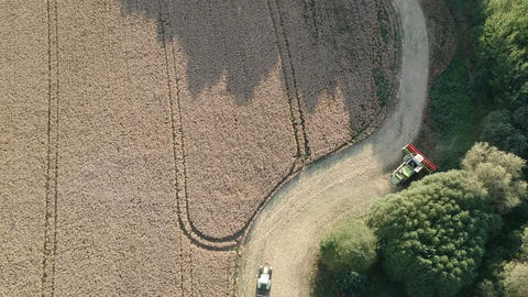 Combine harvester harvesting rapeseed, aerial view Live Action