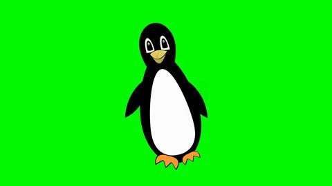 penguin walking on green screen, cute mascot, bird cartoon isolated, beautiful GIF