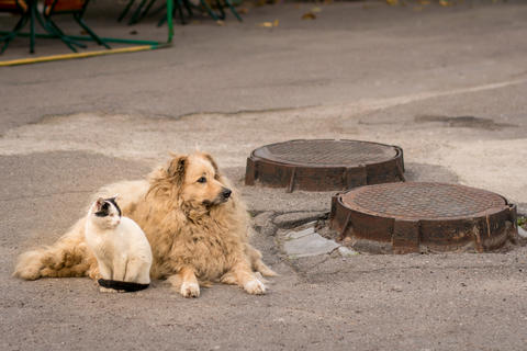 A cat and a dog are sitting together on the sidewalk Fotografía