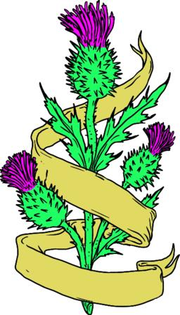 Scottish Thistle With Ribbon Color Drawing ベクター