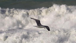 Seagull flying above messy waves ビデオ
