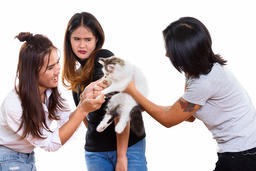 Three young Asian woman friends playing with cute cat with one f Fotografía