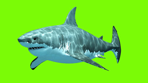 Great White Shark Megalodon on a green background Animation