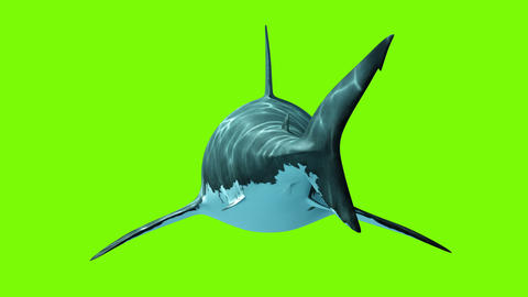 Great White Shark on a green background Animation