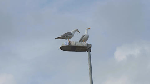 Two grey and white sea gulls on a lamppost against a cloudy sky 영상물