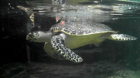Turtle in an aquarium city zoo GIF