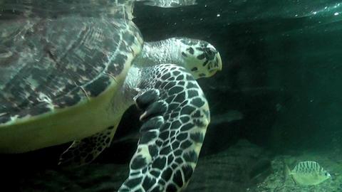 Turtle In Aquarium 1