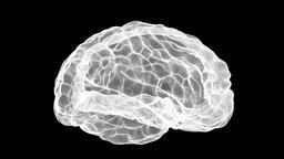 Wireframe brain alpha channel Footage