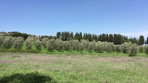 Olive trees in Tuscany Hills Footage