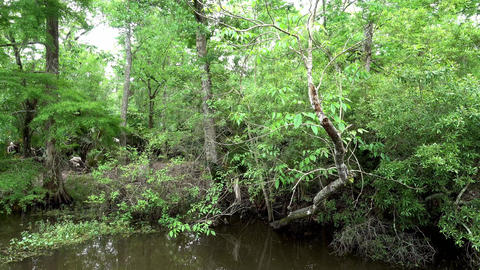 Amazing nature in the swamp near New Orleans Live Action
