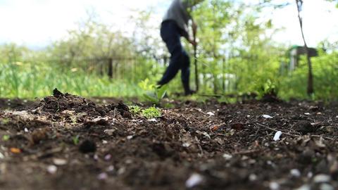 Man digging shovel in the garden Live Action