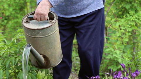 A woman pours water from a watering can Footage