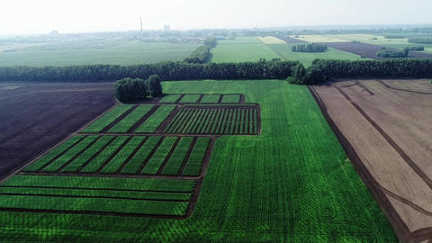 Aerial shot agricultural field Archivo