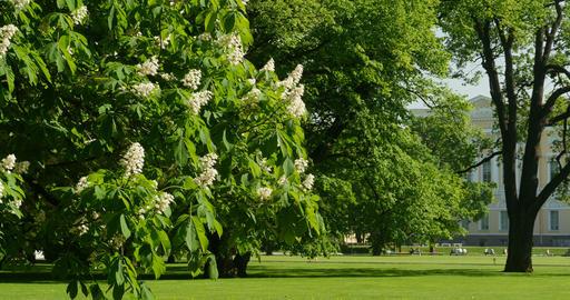 flowering tree in the park Footage