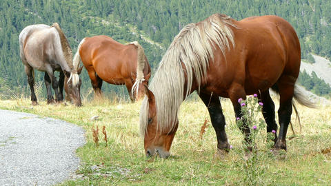 Horses grazing in freedom Footage