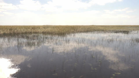 Amazing and thrilling ride through Floridas Everglades Footage