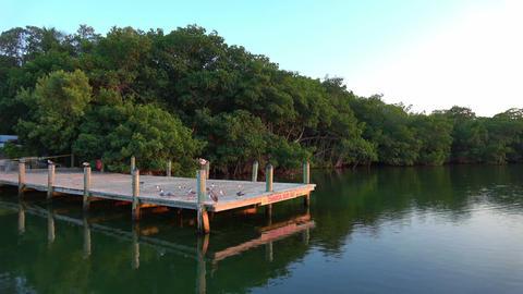 Beautiful little bay in the Florida Keys Footage
