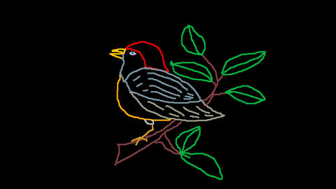 4K BIRD DRAWING CG動画素材