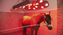 Horse under infrared lamp Footage