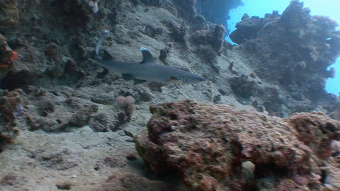 Fantastic dive with sharks Footage