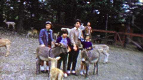 1961: Family petting young donkey mules at Pocono Wild Animal Farm Footage