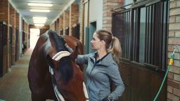 Woman brushing fur of beautiful horse Footage