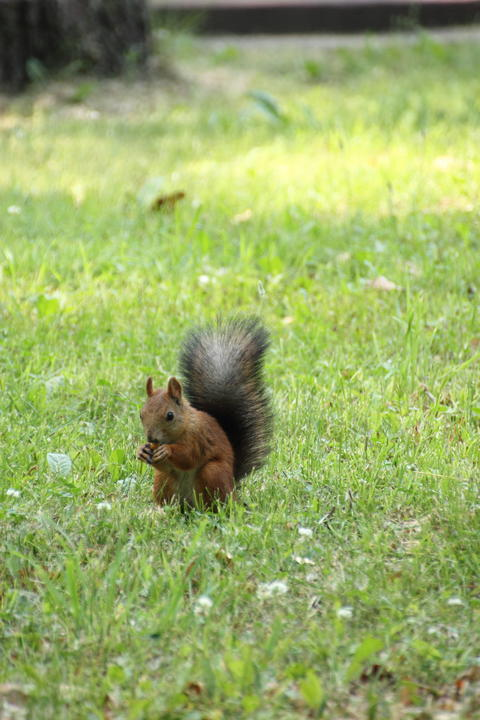 Squirrel on the grass フォト