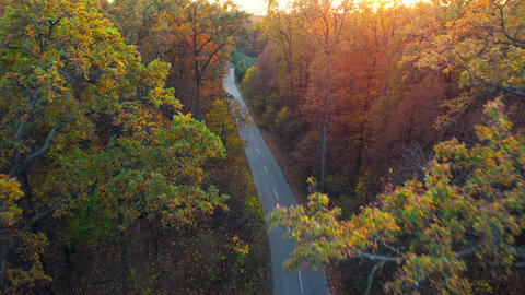 Aerial view on autumn forest road. Scenic autumn landscape Live Action