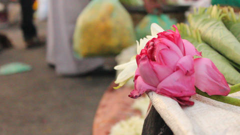 Close up of Lotus flower Taken at flower market Stock Video Footage