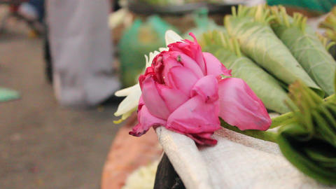 Close up of Lotus flower Taken at flower market Live Action