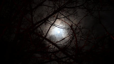 Short spooky and eerie time lapse of the moon viewed through dead winter tree Footage