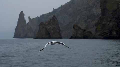Seagull slow motion flight at backdrop of the rocks and catch pieces of the Live Action