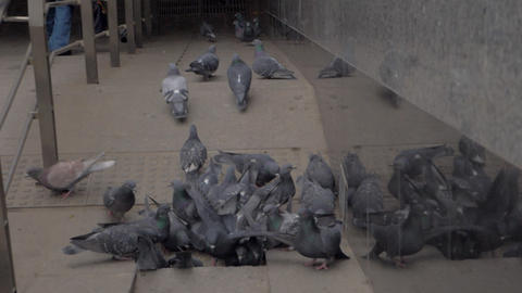 Flock of pigeons flying away from subway entry stairs. Moscow, Russia Archivo